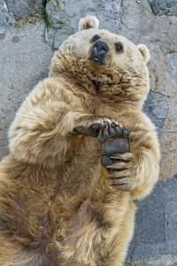 クマ フリー