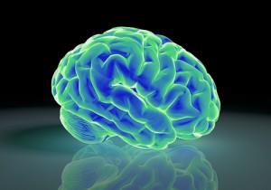 脳 フリー