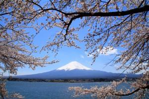 まとめ 桜と富士山 フリー