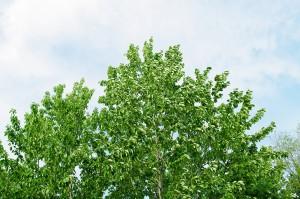 木 フリー素材