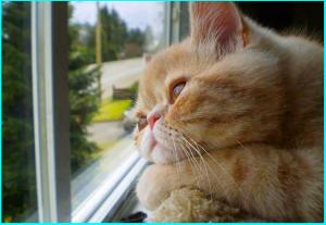 画像引用元:http://entermeus.com/wp-content/uploads/2014/07/cat-waiting-window-65.jpg