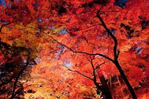まとめ 日本 紅葉 フリー素材