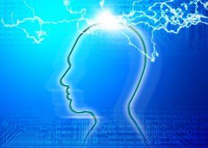 脳 フリー素材